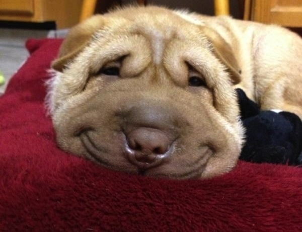 smiling_puppy
